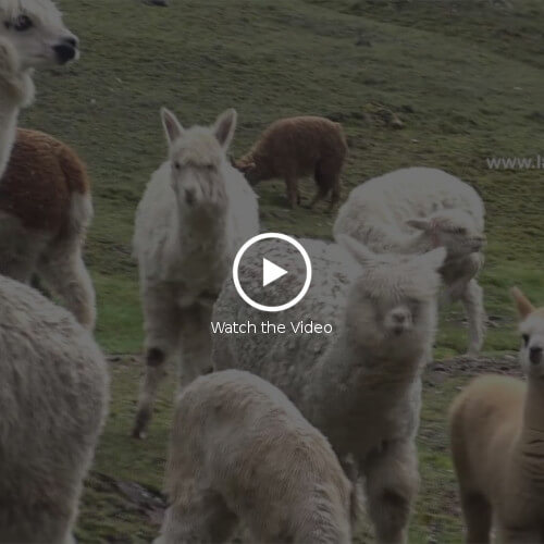 video LatinoSchools-Touristic trips-Peru-Lares trek (PART 1)